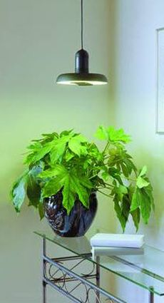 wintergarten optimales licht f r pflanzen und menschen. Black Bedroom Furniture Sets. Home Design Ideas